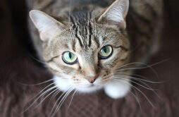 驱蚊产品对猫有害吗 夏季猫生安全须知