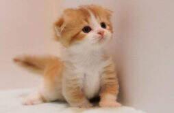 """驱蚊酯对猫咪有害吗 为何被称为""""猫毒药"""""""