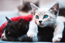 夏天猫怕不怕热 高温天气下猫会中暑吗