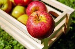 苹果减肥法三天有用吗 苹果减肥法几天
