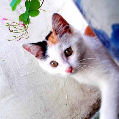 什么属相不能养猫 原来属狗蛇猴相克不宜养